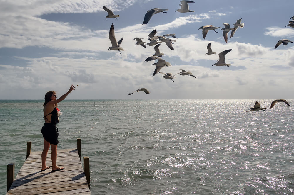 Bird Watching Belize