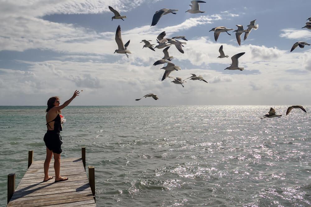 Bird Watching Belize
