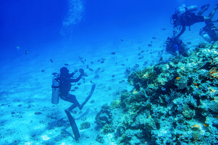diving with divers blue hole