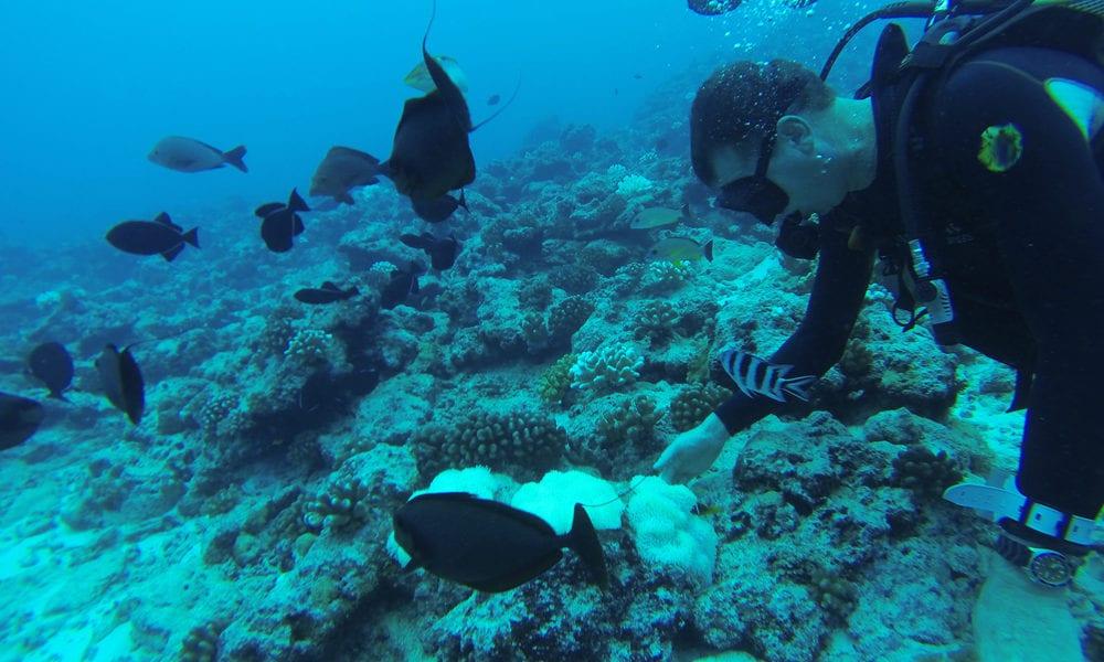 expert Diver belize